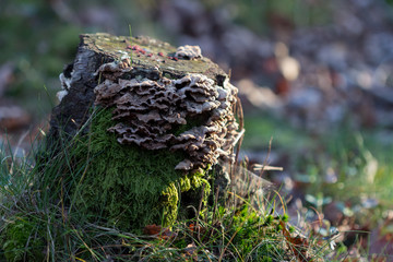 Tree stump in the forest with mushrooms and moss
