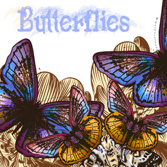 Butterfly colorful  background for design