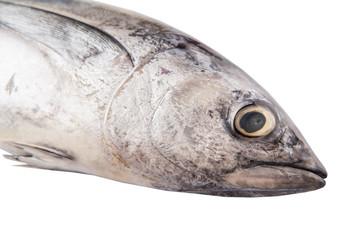 Mackerel tuna or ikan tongkol over white background