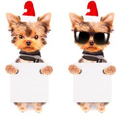 christmas dog as santa with banner