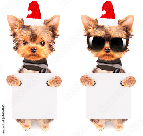canvas print picture christmas dog as santa with banner