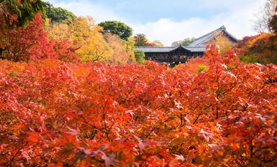 京都 東福寺の紅葉