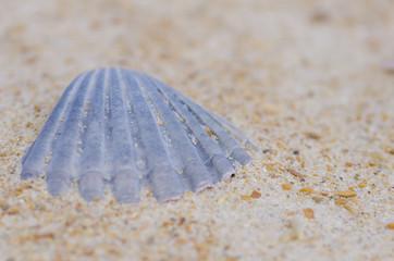 Textured Shell at ocean beach backdrop