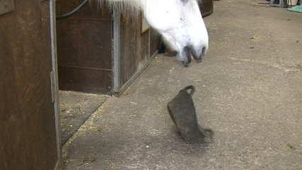 Hungry horse playing with his food skip or pan