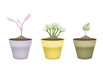 Pink Flowers and Green Leaves in Terracotta Pots
