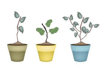 Cherry Tree and Apple Tree in Ceramic Pots