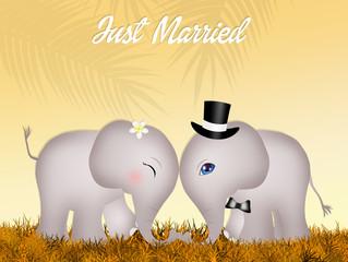 Wedding of elephants