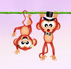 monkeys in love