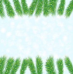 festive background with the branches of christmas tree