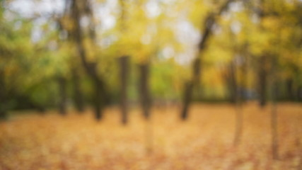 out of focus background of town park in autumn