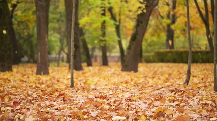 leaves falls in autumn park, windy day