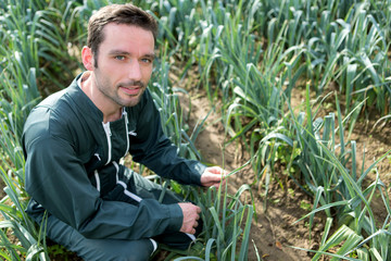 Farmer working in a leek field