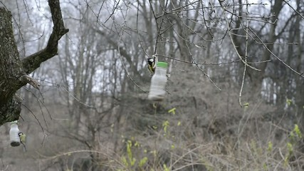 Birds (Titmouse) eating from feeding-rack