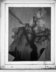 Looking through broken window at graveyard