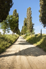 Country Tuscany road with cypresses in the afternoon (Italy)