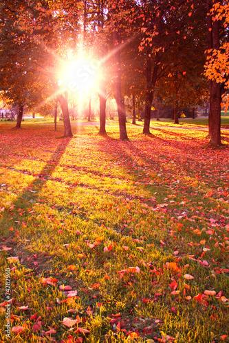 Keuken foto achterwand Bossen Park View Trees of Yellow