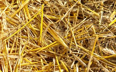 Texture hay closeup in color