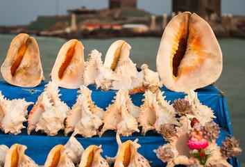 seashells on sale at market