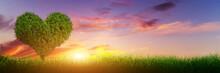 """Постер, картина, фотообои """"Heart shape tree on grass field at sunset. Love, panorama"""""""