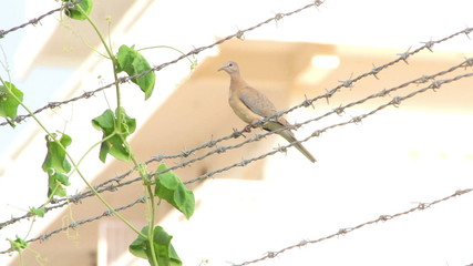 Bird sitting on barbed wire