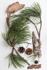 Pine Tree Twigs, Cones and Bark Pieces