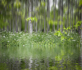 green grove reflected on water