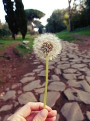 Esprimere un desiderio sull'Appia Antica