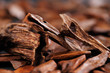 In most Arab countries bukhoor is the name given to wood chips