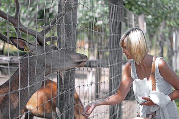 Young woman feeding a deer at the zoo on sunny summer day