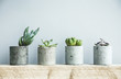 Leinwanddruck Bild - Succulents in diy concrete pot. Scandinavian room interior decor