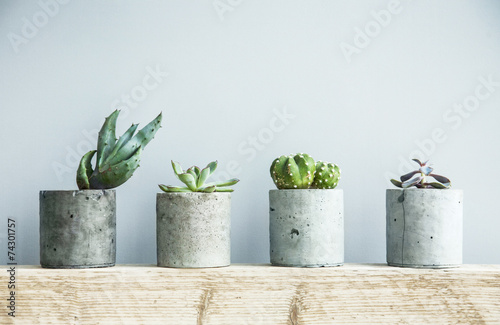 Succulents in diy concrete pot. Scandinavian room interior decor - 74301757