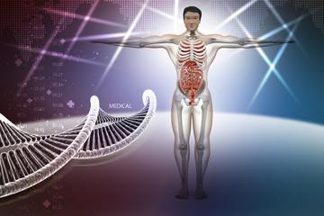 human anatomy with dna
