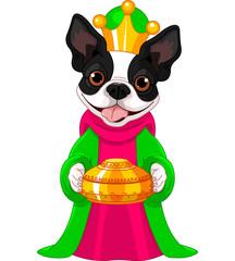 The Boston terrier as a Biblical Magi