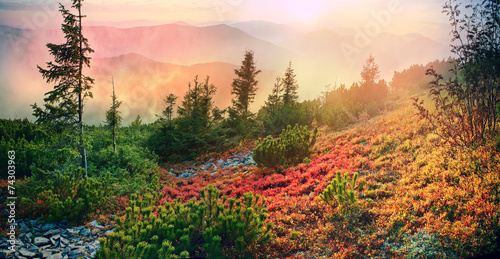 alpine autumn in Gorgany - 74303963