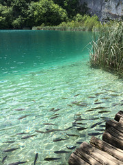 fish in Croatia plitvice lakes national park