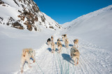 Dog sledding tour in Tasiilaq, Greenland