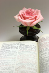 Open Bible with a Pink Rose in the Background