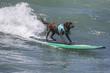 Surf Dog - 74310961