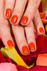 Manicure - Beautiful manicured woman's hands