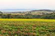 Krajobraz Gór Świetokrzyskich od strony Św. Katarzyny - 74312991