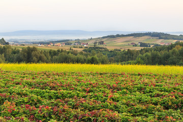 Krajobraz Gór Świetokrzyskich od strony Św. Katarzyny
