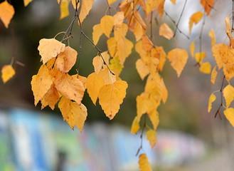 arbre...automne