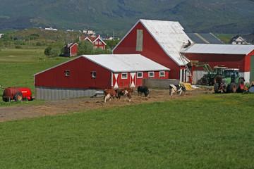 à la ferme