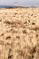 Lava Beds National Monument Rock Mounds Grassland Northern CA