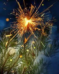 snow covered tree and sparkler