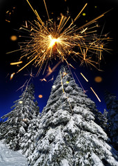 snow covered spruce trees and sparkler