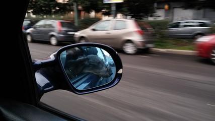 Bassotto in auto