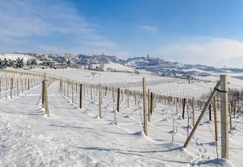 Wintry vineyards of Piedmont, Italy.