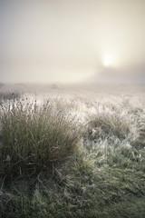 Stunning sun beams light up fog through thick fog of Autumn Fall