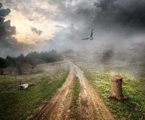 Bird over country road